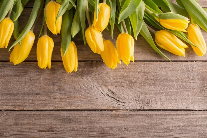 Significado del color Amarillo en las flores