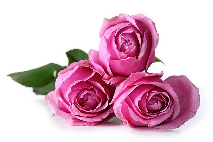 Significado del color Rosado en las flores